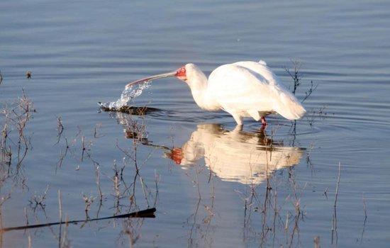 De Zeekoe Guest Farm: Birdlife