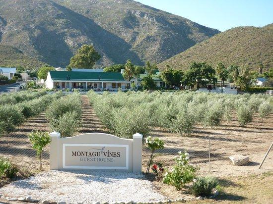 Montagu Vines Guesthouse: FABULOUS SITUATION