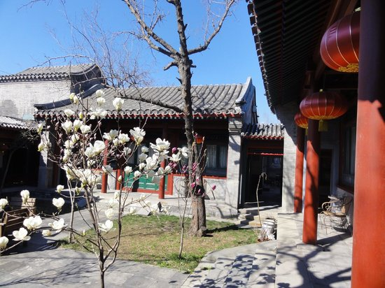 Beijing Sihe Courtyard Hotel: Morning view of main courtyard with spring blossoms
