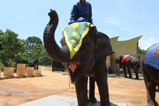 Nirwana Gardens - Nirwana Resort Hotel: Elephant ride at Resort centre...