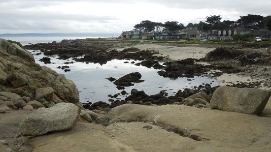Andril Fireplace Cottages: Tide pools Pacific Grove