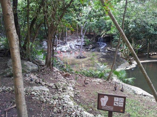 Iberostar Tucan Hotel: Ecosistema del hotel