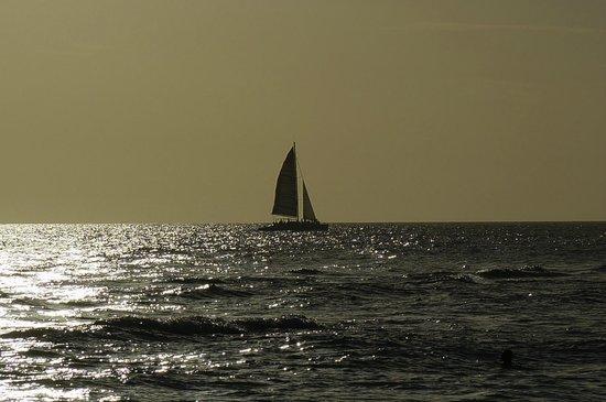 Viva Wyndham Dominicus Beach: Vista desde la playa