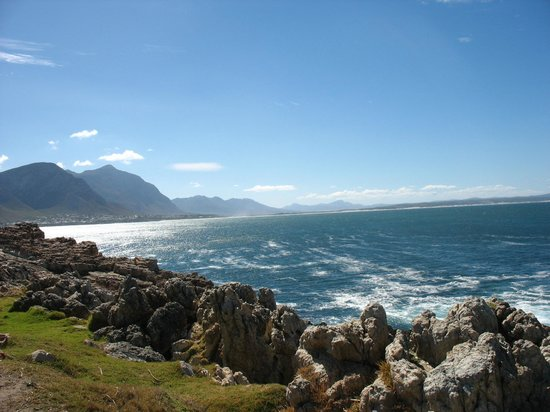 Hermanus Backpackers: from the dorm upstairs frontside you see this from far. This is a close up.
