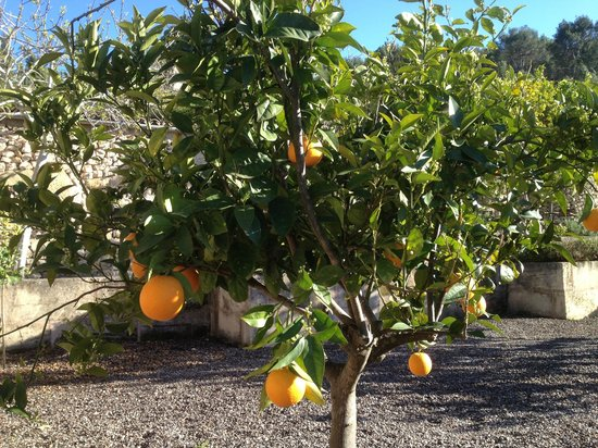 Agroturismo sa Rota d'en Palerm: tuin