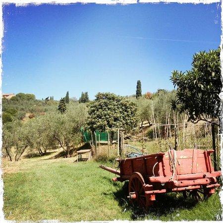A Casa di Olivo: l'orto
