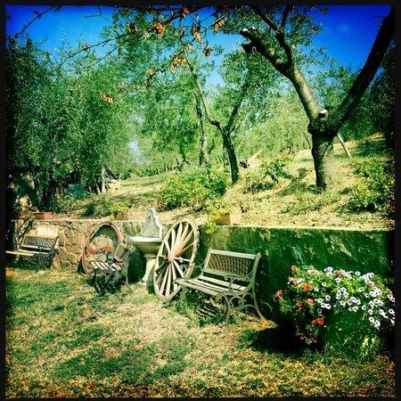 A Casa di Olivo: gli olivi