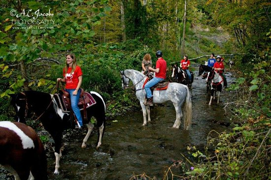 Painted Bar Stables : Trail ride through the creek