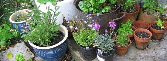 Miharu Herb Hana Garden