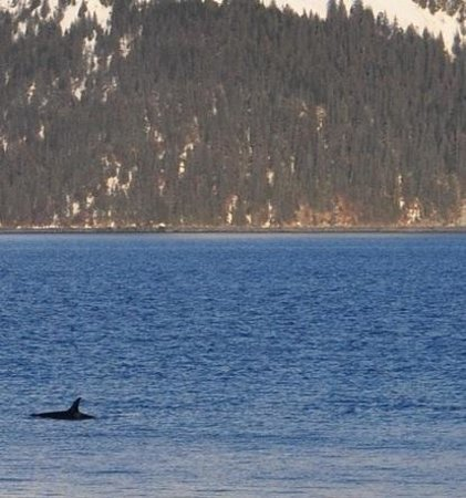 Alaska Paddle Inn: Whale watching from my deck!!