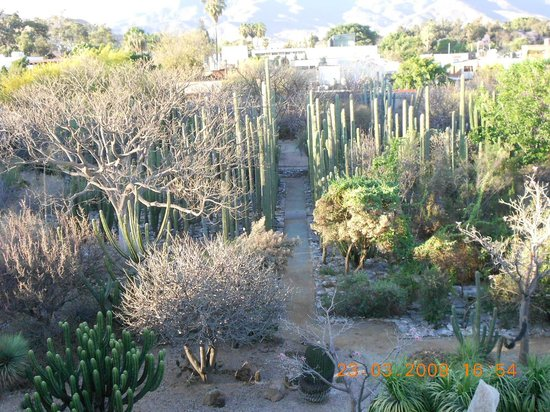 Jard n bot nico de santo domingo oaxaca picture of museo for Jardin etnobotanico oaxaca