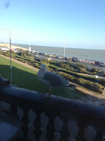 Lansdowne: Seagull who visited every morning.