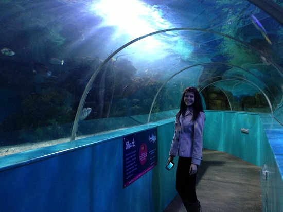 Walk Through Tank With Fish And Sharks Picture Of Blue