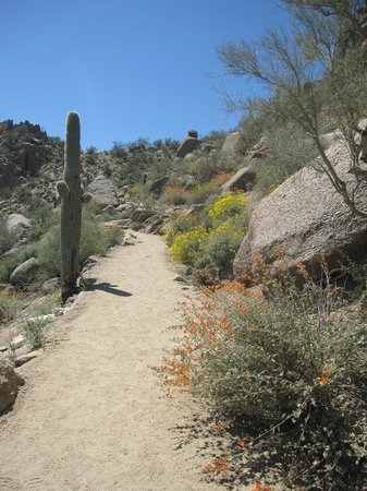 Carefree Resort & Conference Center: Hiking Nearby Pinnacle Peak Trail in the Springtime