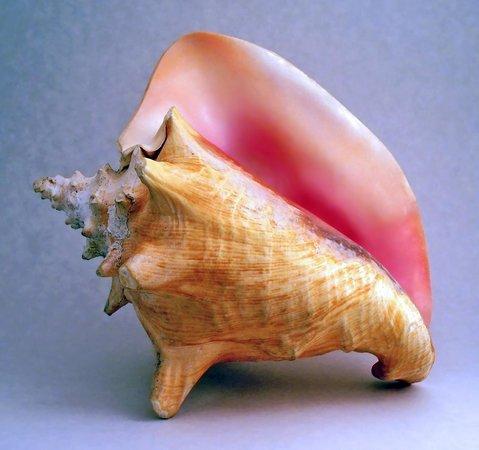 De Man Shell Collection