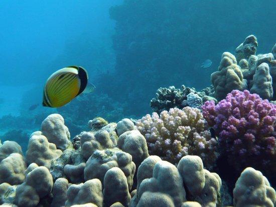 Diving Center- Iberotel Club El Fanar