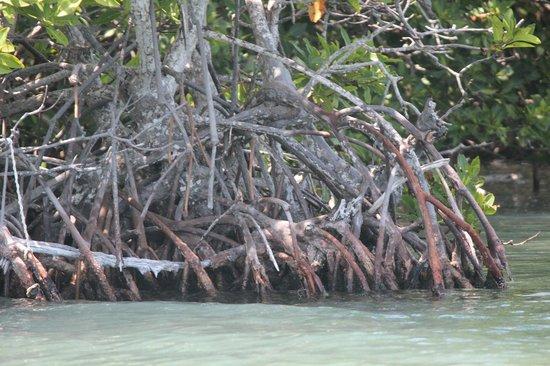 Sian Ka'an Biosphere Reserve: Mangrovie