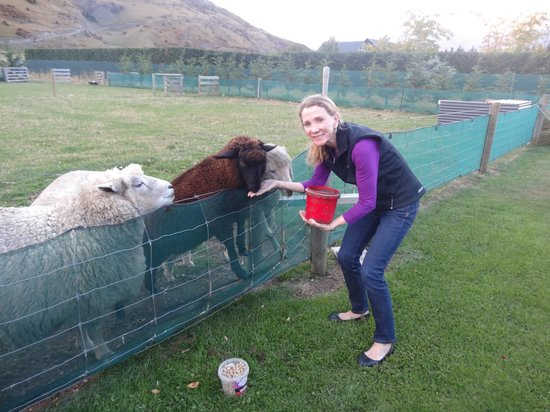 Queenstown Country Lodge: Feeding the pets