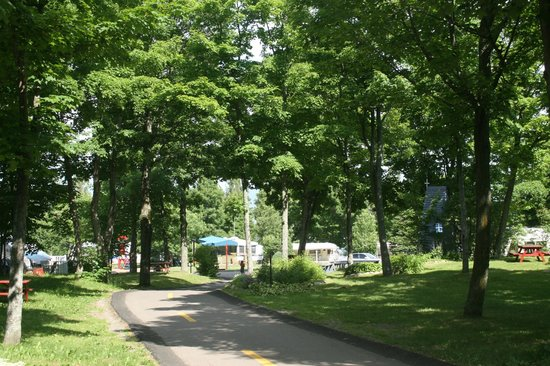 Camping des Aulnaies : Grand arbres mature sur presque tout le Camping
