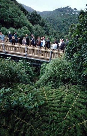 Wellington City Walkways