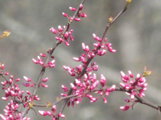 Kennesaw Mountain National Battlefield Park: Pretty flowers
