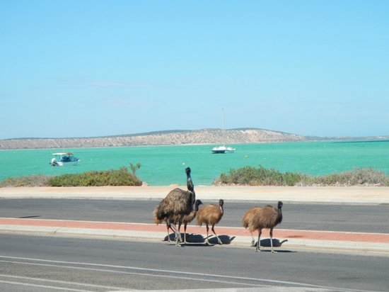 Denham Australia  City new picture : photo1 Foto di Shark Bay, Denham TripAdvisor