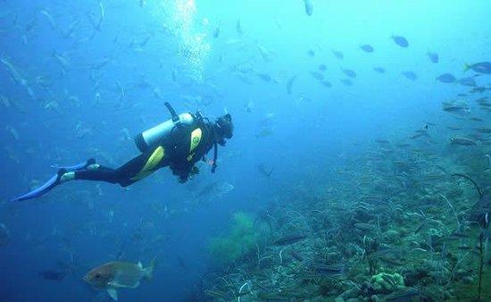 Fat Cat Diving Center