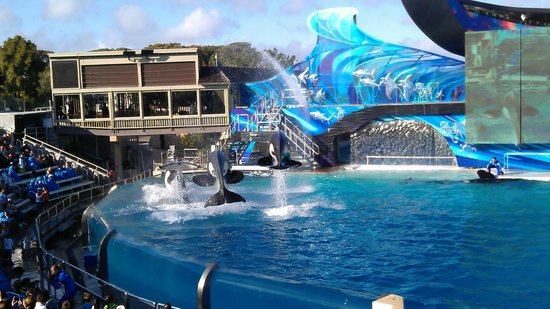 Seaworld San Diego One Day Tour