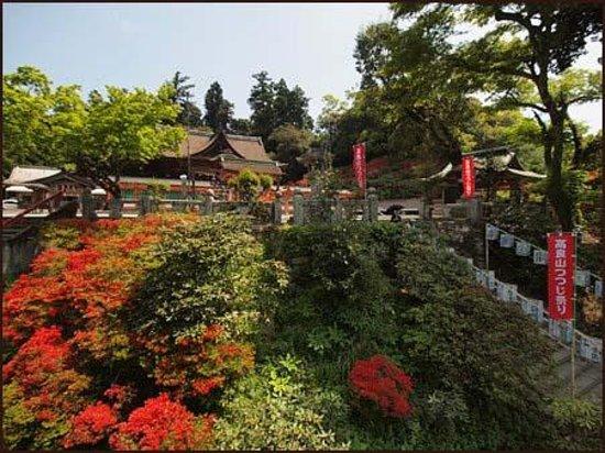 Kurume-billede