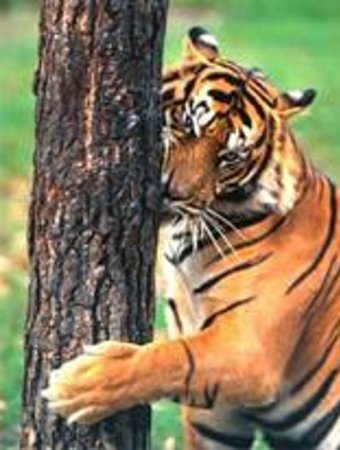 Gondacherra Wildlife Sanctuary