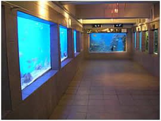 East London Aquarium South Africa Top Tips Before You