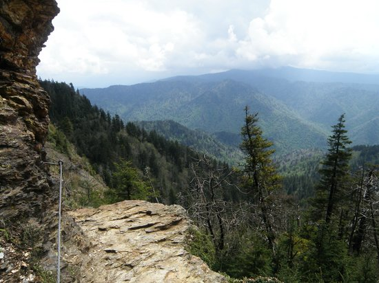Rhododendron Tunnel May 2012 - Picture of Mount LeConte ...
