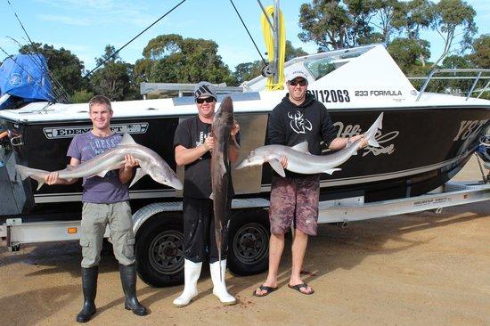 Mallacoota Fishing Charters &Tours: a couple of good sharks
