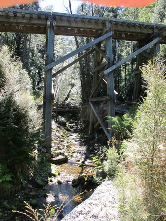 West Coast Wilderness Railway: forrest walk at half way