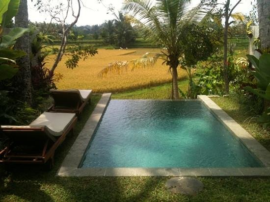 Ubud Padi Villas: private pool