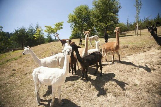 Retiro Park Lodge: Just a few of the many friends you'll find on the farm :)