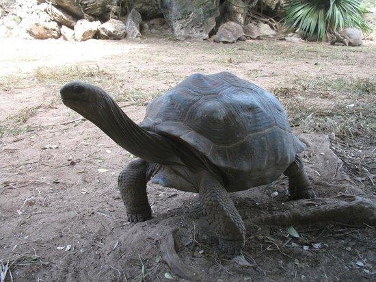 Mamy Cherie Restaurant Rodrigues: Il parco delle tartarughe