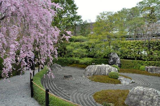 สวนไทโซอิน: weeping cherry blossom