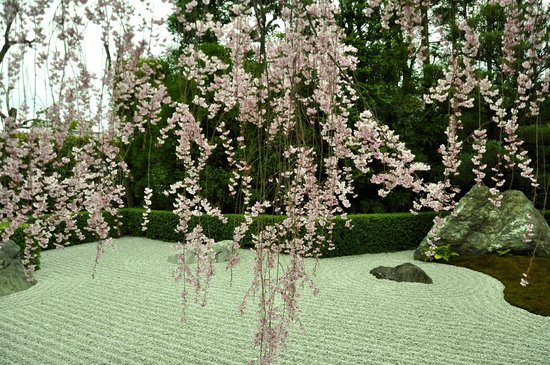 สวนไทโซอิน: gorgeous blossoms