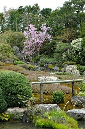 สวนไทโซอิน: sakura (cherry blossoms) in bloom