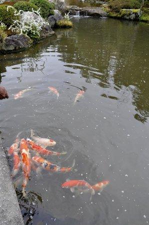 สวนไทโซอิน: koi expecting food