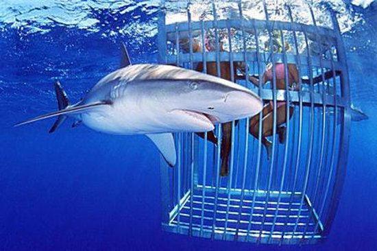 Shark Cage Diving Tours Foto