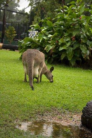Daintree Mangroves Wildlife Sanctuary