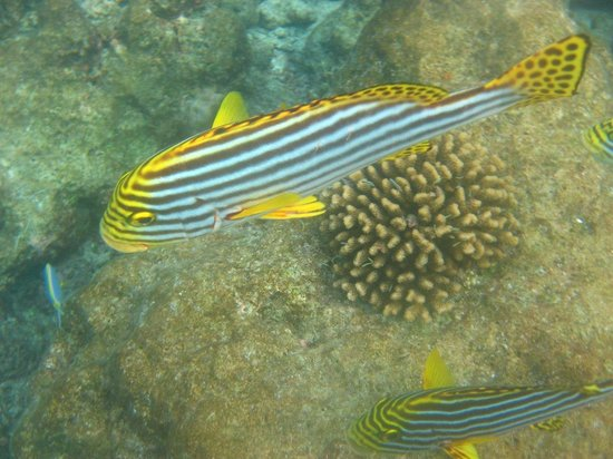 Filitheyo Island Resort: Fish