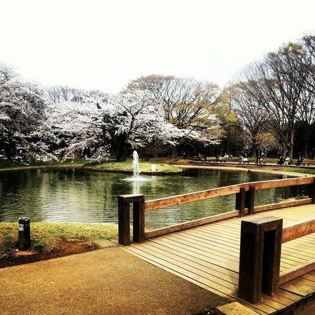 Shibuya, Japan: Yoyogi park