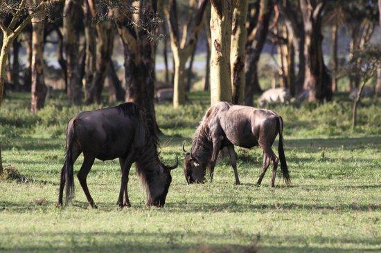 Sanctuary Farm : wildlife 3