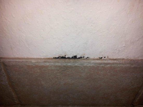 شولا فيستا ريزورت: MOLD in the bathroom