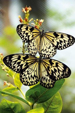 WHS Butterfly Farm