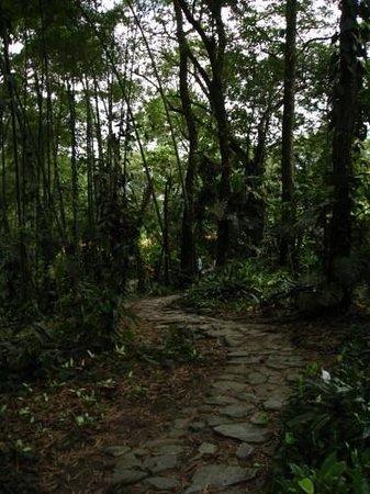 Jardin Botanico San Jorge