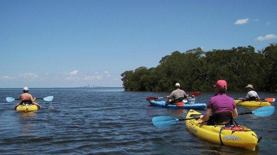 Shan-T Native Kayak Tours, Inc.: Kayaking in the mangoves